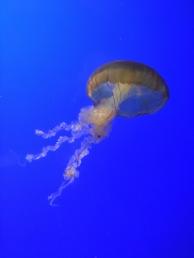 Oh, majestic jellyfish.